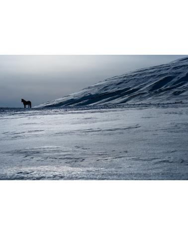Cheval islandais sur la glace
