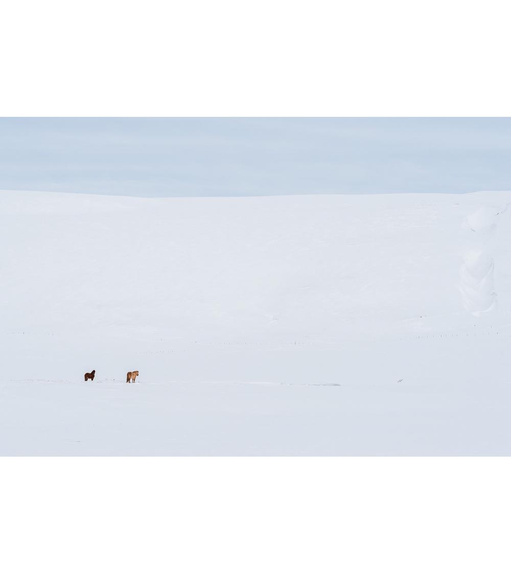 Chevaux au nord de l'Islande