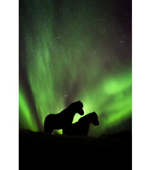 Chevaux islandais sous les aurores boréales