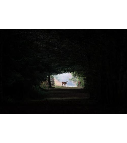 une biche et son faon dans la forêt, Jura