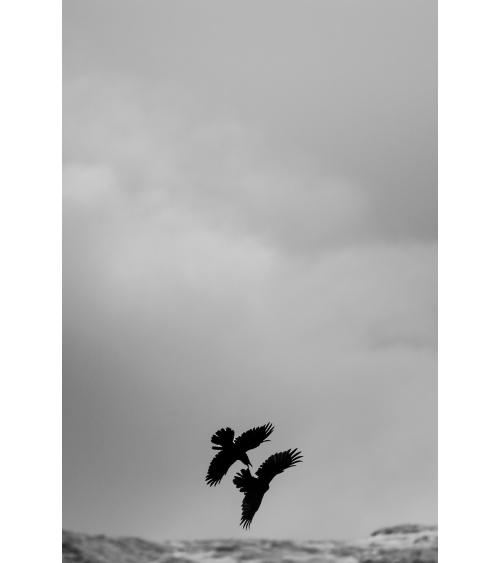 Photo de grand corbeau en Islande