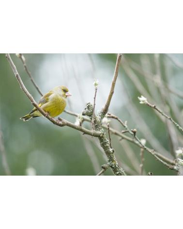 Cartes postales d'art oiseaux de France
