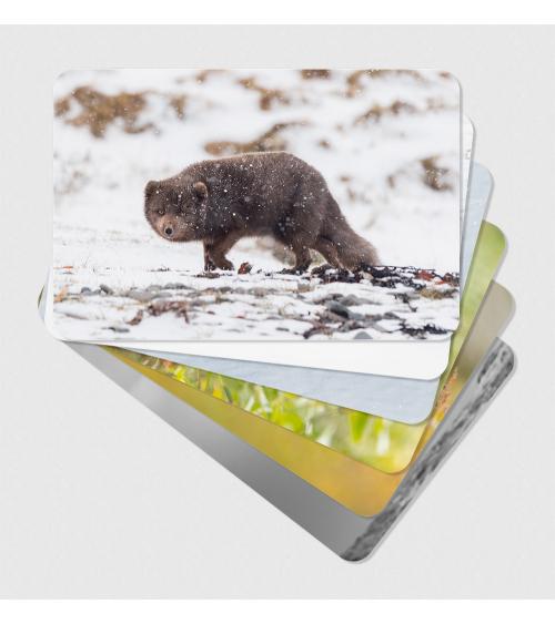 Cartes postales d'art Arctique