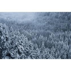 La forêt bleu