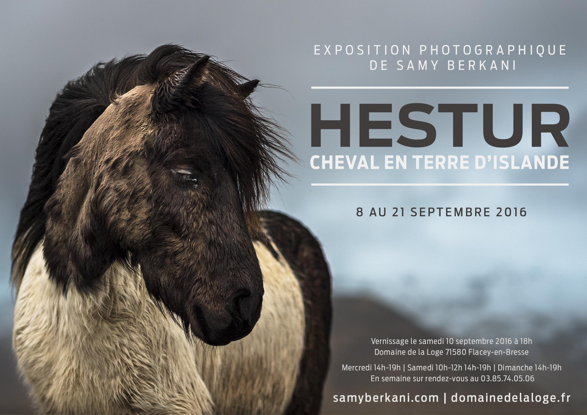 Hestur, le cheval islandais