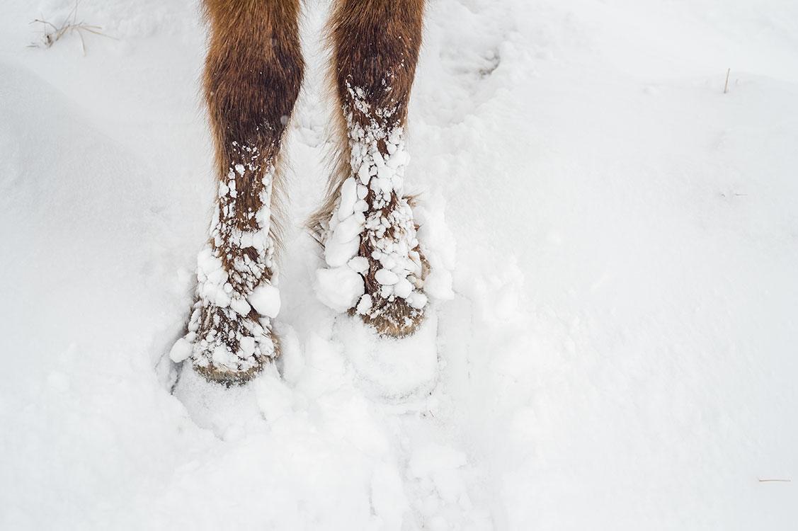 Ice clogs