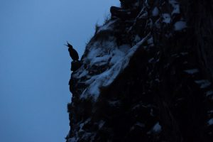 Grand cormoran aux dernières lueurs